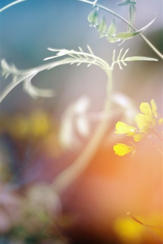 iPhone Wallpaper Wildflowers, plants, bokeh
