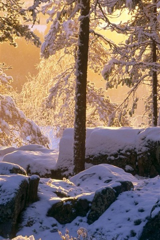 iPhone Wallpaper Winter, thick snow, forest, trees, sunshine