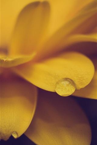 iPhone Wallpaper Yellow flower close-up, petals, dew