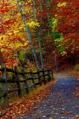 iPhone Wallpaper Autumn park, trees, fence, road, falling leaves