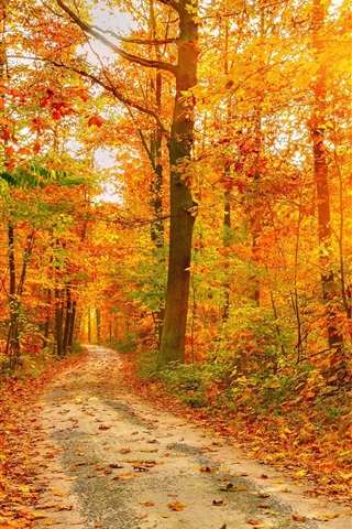 iPhone Wallpaper Beautiful autumn forest, trees, path, sun rays