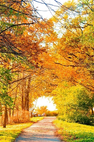 iPhone Wallpaper Beautiful autumn park, trees, path, yellow leaves