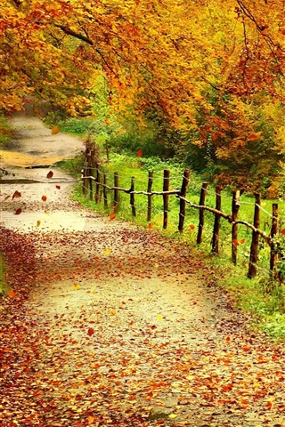 iPhone Wallpaper Beautiful autumn scenery, trees, yellow leaves, path