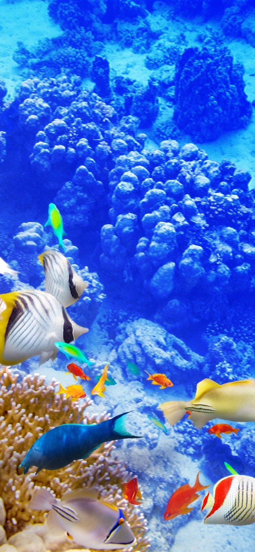 Wallpaper Blue sea underwater world, coral, tropical fishes 3840x2160 UHD 4K Picture, Image