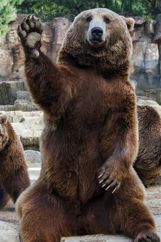 iPhone Wallpaper Brown bears in zoo
