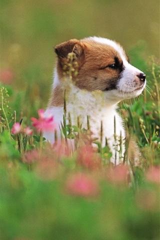 iPhone Wallpaper Cute puppy, grass, flowers, blurry