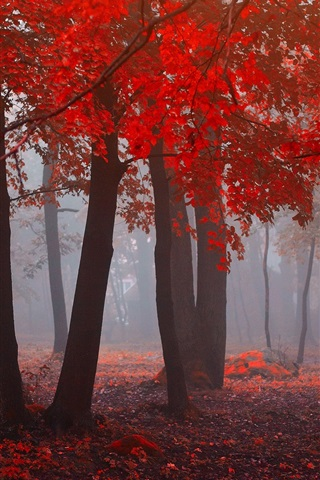 iPhone Wallpaper Forest in autumn, red leaves, trees, fog