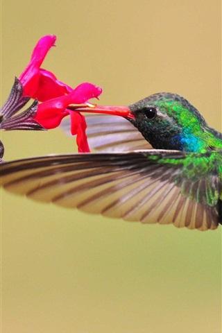 iPhone Wallpaper Hummingbird, nectar, red flower