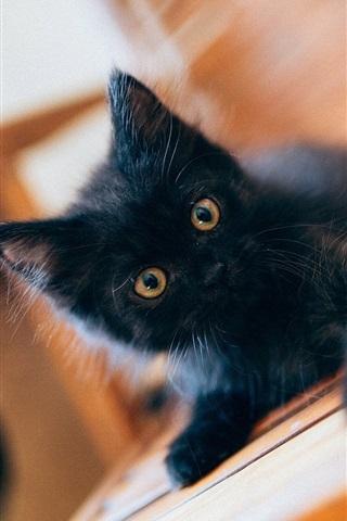 iPhone Wallpaper Lovely black kitten baby