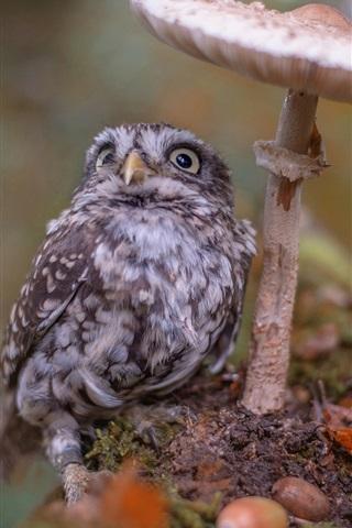 iPhone Wallpaper Owlet, bird, mushroom, bokeh