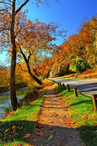 iPhone Wallpaper Park, trees, road, autumn, sunshine