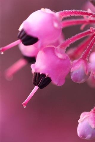 iPhone Papéis de Parede flores cor de rosa flor, primavera