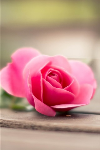 iPhone Wallpaper Pink rose, wood board, bokeh