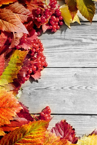 iPhone Wallpaper Red leaves, berries, wooden board, autumn
