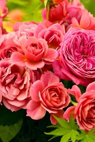 iPhoneの壁紙 レッド牡丹の花