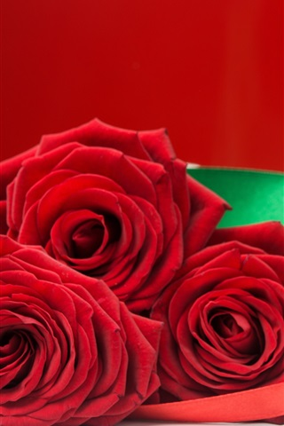iPhone Wallpaper Red rose and gift, romantic