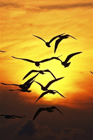 iPhone Wallpaper Seagulls flying at sunset