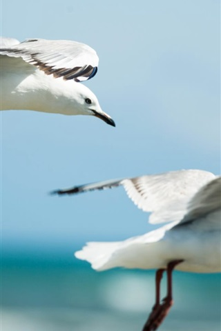 iPhone Wallpaper Seagulls flying in sky