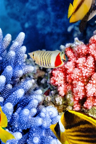 iPhone Wallpaper Tropical fishes, coral, underwater, sea animals
