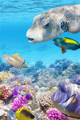 iPhone Wallpaper Tropical fishes underwater, coral reef, ocean