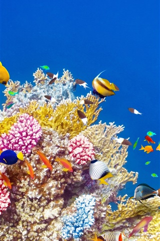 iPhone Wallpaper Underwater world, coral, tropical fishes, colorful
