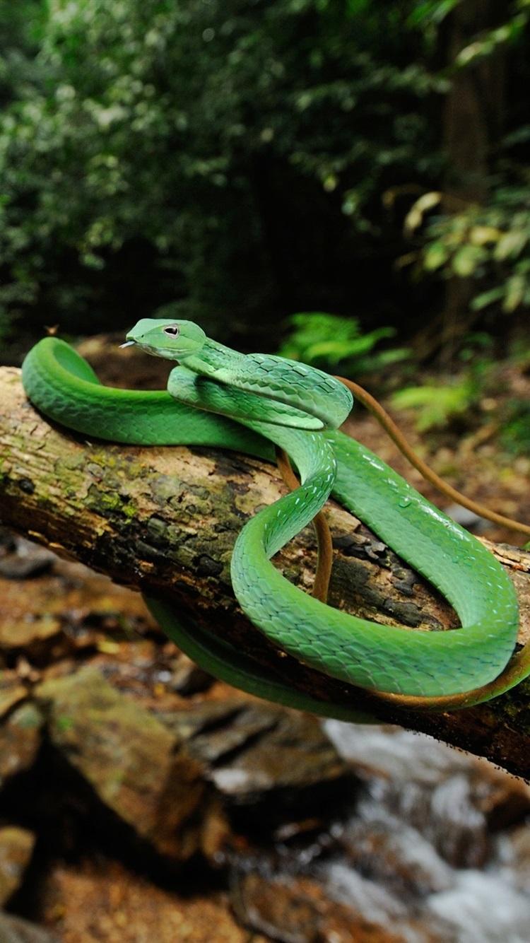Wallpaper wildlife green snake tree stream 2880x1800 hd - Green snake hd wallpaper ...