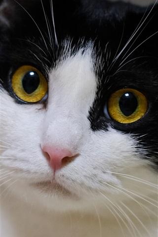 iPhone Wallpaper Yellow eyes cat, black white