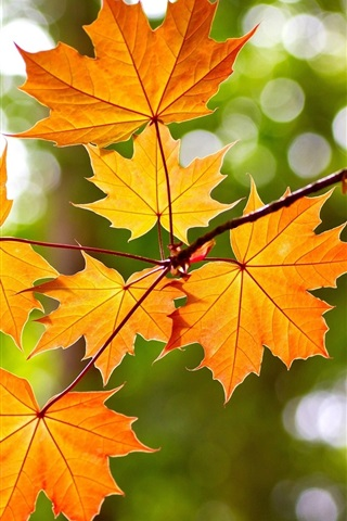 iPhone Wallpaper Yellow maple leaves, autumn, bokeh