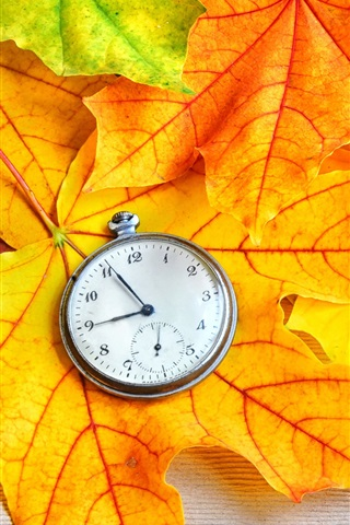 iPhone Wallpaper Autumn maple leaves and pocket watch