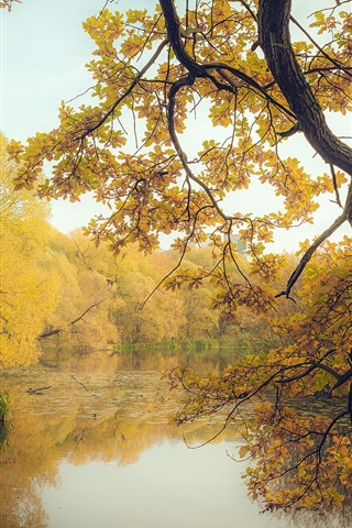iPhone Wallpaper Autumn, pond, trees, yellow leaves