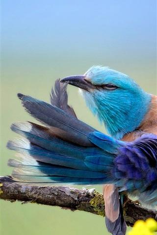 iPhone Wallpaper Blue feather bird dancing wings