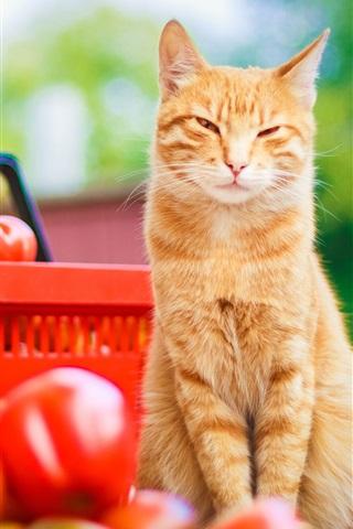 iPhone Обои помидоры взгляд Cat