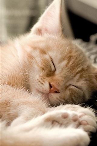 iPhone Wallpaper Cat sleeping at keyboard side