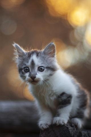 iPhone Wallpaper Cute furry kitten, fence, bokeh