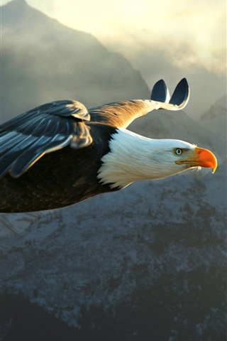 iPhone Wallpaper Eagle flying, wings, sky