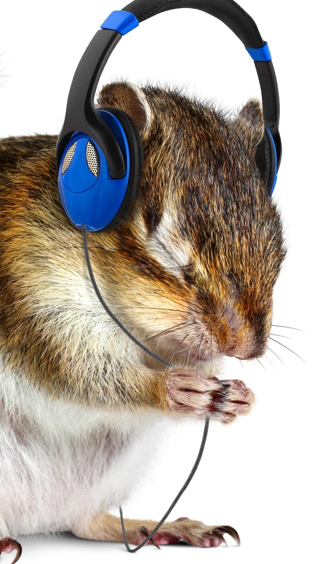 壁紙 おかしい動物 リス 音楽を聞く ヘッドホン 3840x2160 Uhd 4k