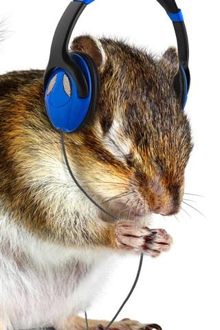 Funny Animal Squirrel Listen Music Headphones 1080x1920 Iphone 8 7