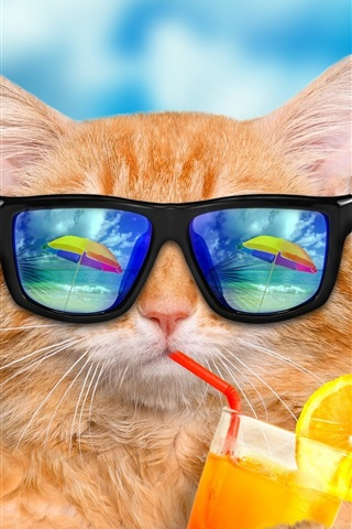 iPhone Wallpaper Funny animals, cat and sunglasses, eat drinks