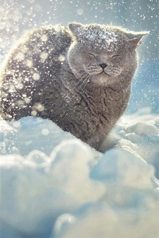iPhone Wallpaper Gray cat in the thick snow winter