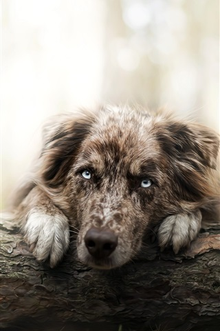 iPhone Wallpaper Lonely dog in forest, face, eyes
