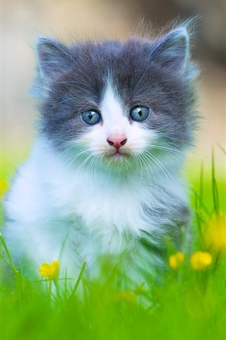iPhone Wallpaper Lovely furry kitten in the grass