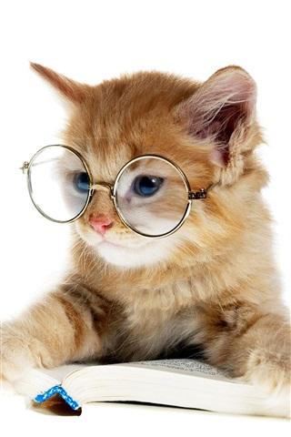 iPhone Wallpaper Lovely kitten reading a book, glasses