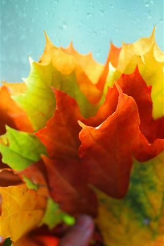 iPhone Papéis de Parede Muitas folhas de bordo, verde amarelo vermelho, gotas de água
