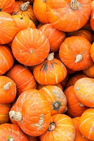 iPhone Wallpaper Many pumpkin, vegetable close-up