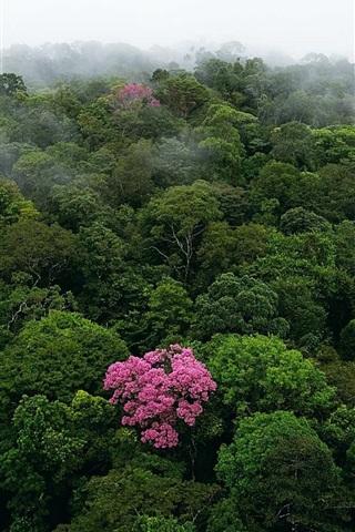 iPhone Wallpaper Morning top view the forest, fog, tree flowers