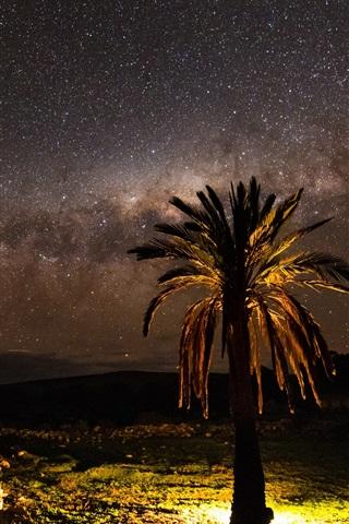 iPhone Wallpaper Night, tree, lights, stars, Palma