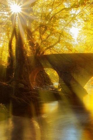 iPhone Wallpaper Park, bridge, river, trees, leaves, sun rays