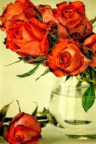 iPhone Wallpaper Red flowers, bouquet roses, vase, water