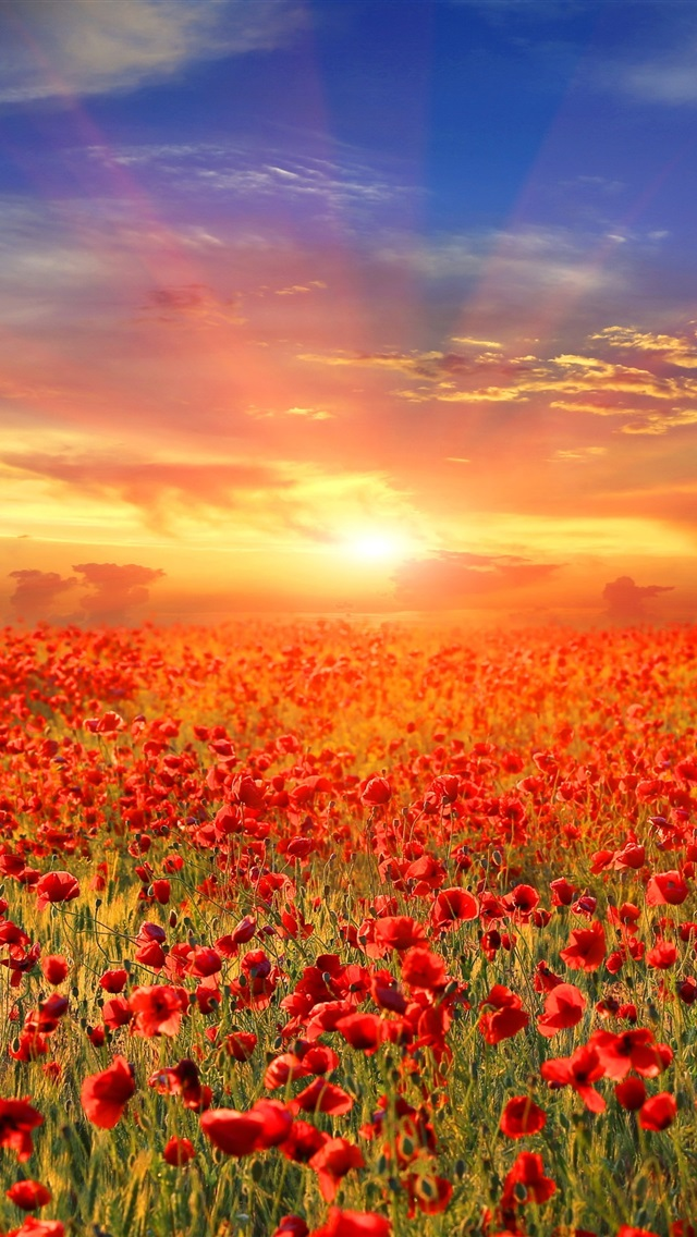 Wallpaper red poppy flowers field sunrise 3840x2160 uhd 4k picture image - Background images 4k hd ...