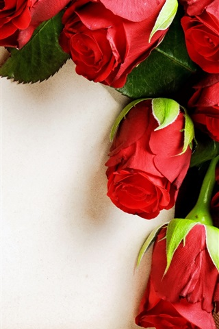 iPhone Wallpaper Red rose flowers, romantic, paper